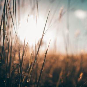 Les différences entre la Pentecôte juive et la Pentecôte chrétienne